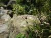 Hiking 2012 June 16 - 頁 2 23315a498615916