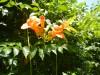 Hiking 2012 June 16 - 頁 2 E3d0b3498627219