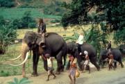 Индиана Джонс и храм судьбы / Indiana Jones and the Temple of Doom (Харрисон Форд, Кейт Кэпшоу, 1984) 5c7502507664477