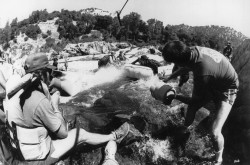 Индиана Джонс и храм судьбы / Indiana Jones and the Temple of Doom (Харрисон Форд, Кейт Кэпшоу, 1984) Fb0c48509894335