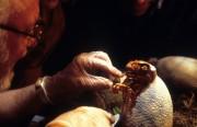 Парк Юрского периода / Jurassic Park (Сэм Нил, Джефф Голдблюм, Лора Дерн, 1993)  B5f936510426052