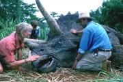 Парк Юрского периода / Jurassic Park (Сэм Нил, Джефф Голдблюм, Лора Дерн, 1993)  Cb5907510425434